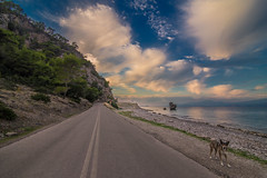 Hey you! (Vagelis Pikoulas) Tags: dog animal canon 6d tokina 1628mm view landscape sky clouds cloud cloudy colour colours sunset day sun blue afternoon alepochori alepoxwri road street greece europe 2016 autumn november