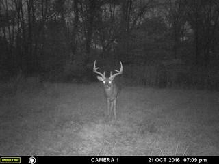 Kentucky Whitetail Hunt 24