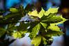 Autumn (bor4s) Tags: day park staten island