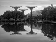 Supertrees, Gardens by the Bay (AndersBq) Tags: garden sigmaaf5014exdghsm asia reflection landscape calm serene morning water supertree singapore outdoor monochrome palms structure reflexion sg dawn
