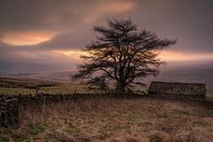 Moorland Winter (.Brian Kerr Photography.) Tags: cumbria hartsidepass tree moorland moors winter alston sunrise coldmorning briankerrphotography