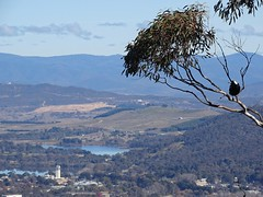 Canberra '15 (faun070) Tags: australia canberra act mtainslie mountainslie