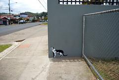 oye chico, está en nuestras manos (se van en verano) Tags: grafiti gato palmares estencil larecta