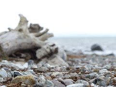 Am Brodtener Steilufer (four-hearts) Tags: schleswigholstein niendorf ostsee steilufer ostholstein landschaft natur naturlandschaft strand meer steine brodtenersteilufer lübeckerbucht strandmakro