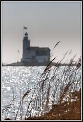 Het paard van Marken (Sjoerd Veltman, Alkmaar) Tags: horse lighthouse holland netherlands nederland vuurtoren marken paard noord sjoerd 2014 veltman