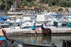 Just two guys washing a horse in the sea... (Chris J Hart) Tags: horse marina gozo mgarr ghajnsielem gajnsielem