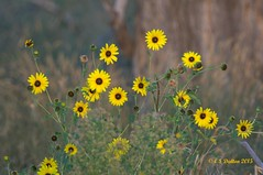 August 30, 2015 - Flowers at the Rocky Mountain Arsenal. (Ed Dalton)
