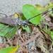 Unknown Species of Long-horned Beetle