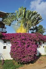Mexico Coast Beautiful Day Oaxaca (Ilhuicamina) Tags: flowers costa palms mexico coast scenery mexican oaxaca walls puertoescondido