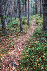 Just follow the path (TimoOK) Tags: suomi finland woods hiking path route mets kuni mustasaari vaellus polku reitti korsholm