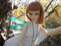 DSCN3989 (Cane's Folly SL) Tags: dragonfly dragons fantasy fairies damselfly lb lizards beardies beardeddragon faeries reptiles fae fairywings dragonflywings petcostume elfdoll dragonwings insectwings sooah dollwings fantasywings petwings bjdwings wyrmcraft damselfflywings