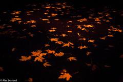 Fin d'un cycle (alex.bernard) Tags: street autumn canada nature night automne canon leaf outdoor québec tamron rue nuit feuilles feuillesdarbre montsainthilaire tamron2470 canon5diii