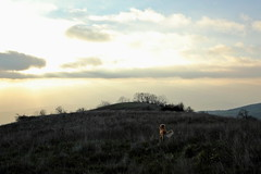 Before Sunset (RD_Elsie) Tags: goldenretriever tuscany toscana bastione