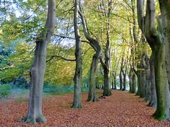 Lede Herfst in Park (02) (Johnny Cooman) Tags: lede vlaanderen belgië bel belgium ベルギー flhregion flemishregion flandre flandes flanders flandern belgique belgien belgia oostvlaanderen eastflanders bélgica aaa panasonicdmcfz200 natuur boom baum arbre tree herfst autumn autofocus natureselegantshots magicmomentsinyourlifelevel3 platinumpeaceaward magicmomentsinyourlifelevel4 thebestofmimamorsgroups otoño herbst automne