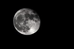 Big moon (Marco Peratello) Tags: moon luna bigmoon rebelt5 canon marcoperatello 55250