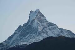 Morning Mountains (Mabacam) Tags: nepal foothills snow mountains rock sunrise trekking walking hiking peaks himalaya annapurna fishtail 2015 holymountain machhapuchhre ghandruk sacredmountain ghandrung annapurnahimal annapurnafoothills