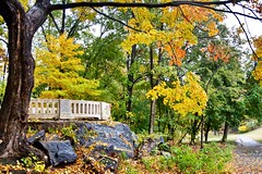 Autumn in Bronx Park (Lojones13) Tags: autumn newyork fall colors foliage bronxpark