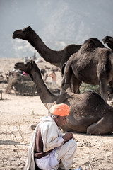 The Camel Hunch!