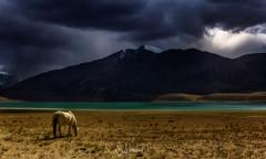 Wild Epiphany II (Subhadip C, AFIAP) Tags: horse india lake mountains clouds kashmir tso ladakh jammu feral subhadip kyagar