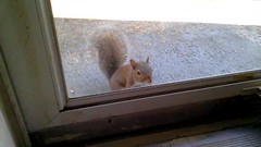 Baby Squirrel Video 1 (Lisa Zins) Tags: video squirrel babysquirrel squirrelvideo