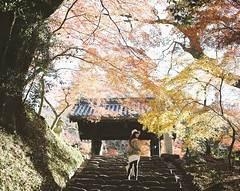 Stairs for 2016 (another side view) Tags: autumn portrait woman film nature beautiful japan female mediumformat japanese pentax autumnleaves brownie fujifilm autumncolor 105mm f24 beautifulnature pentax67 120mmfilm pro400h filmisnotdead naturepeople womanportrait filmlover beautifuljapan browniefilm filmphotograhy