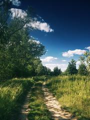 path (Darek Drapala) Tags: path sky skyskape panasonic poland polska panasonicg5 nature country countryside color blue trees sun