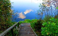 stairway_to_heaven (Paivi Hannele) Tags: finland ourfinland landscape luonto kasvi maisema vesi puut thisisfinland joki jrvi syksy autumn