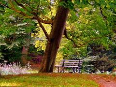 Happy  Bench Monday in Griebenow (swetlanahasenjger) Tags: schlospark griebenow mecklenburgvorpommern deutschland hbm coth coth5