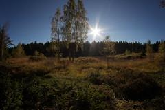 birkesø045 (Henrik DK-Photo) Tags: woods samyang8mmf35 fisheye