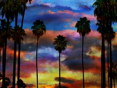 (Christopoulos) Tags: palmtrees textured sky clouds sliderssunday