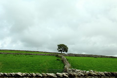 One (RW-V) Tags: canoneos70d canonefs24mmf28stm fence wall england uk tree baum arbre boom 80faves 100faves 120faves 150faves 175faves 200faves 225faves c2c coasttocoast 250faves 275faves 2500views 300faves 325faves