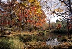 Experimental forest, Hokkaido university (threepinner) Tags: tomakomai hokkaidou hokkaido northernjapan japan autumn forest woods pond mzm pentax pentaxm 28mm f35 positive selfdeveloped