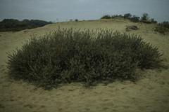 (Yaqine Hamzaoui) Tags: nature green sea sand belgium shortmovie