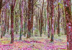 The Forest (Francesco Impellizzeri) Tags: forest erice sicilia landscape