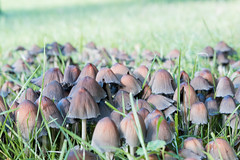 Funghi (yattondave) Tags: autumncolours fall trees leaves westonbirt arboretum