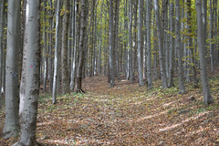 DSC_0501 (Pter_Szab) Tags: mtra matra hungary nature autumn colours mountains galyateto galyatet forest hiking nationalpark landscape