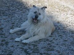 toto feliz 1 (jesust793) Tags: dog pet