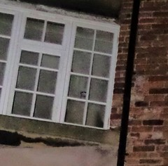 The Face in the Window. (Avvie_) Tags: nottingham ghost spirit dead dark overnight hunt investigation galleries justice police station caves