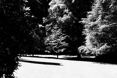 black & white - 1 (alice.decoorebyter) Tags: naturalworld naturephotograph naturepics nature beautiful beauty beautyinnature