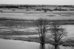 *** (pszcz9) Tags: polska poland przyroda nature natura mokrada wetlands biebrza rzeka river biebrzaski parknarodowy nationalpark wiosna spring pejza landscape beautifulearth woda water sony a77 bw blackandwhite monochrome czarnobiae
