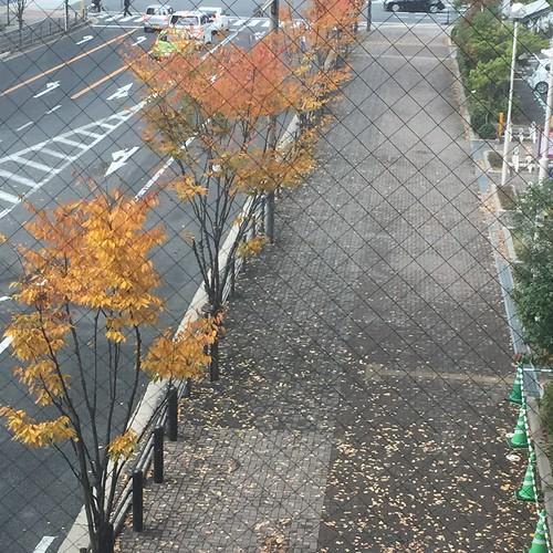 窓越しの黄葉並木