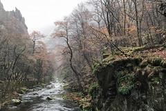 Bodetal (GeraldGrote) Tags: bume trees klippen nebel felsen fall fog wald bach harz rocks thale sachsenanhalt germany de
