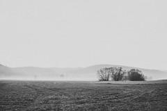 Wide (mripp) Tags: foggy fog rebel black white mono monochrom schwarz weiss landscape landschaft regental regen regenstauf morgenstimmung morgen herbst autumn sony rx1r2 sky himmel gras natur nature art kunst poster wallpaper
