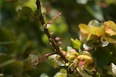 DSC08912 (oliveplum) Tags: light plant nature water singapore bokeh sony marinabay gardensbythebay leica60f28macro