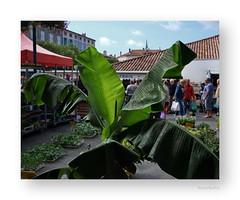 "Plantez des arbres ... • <a style=""font-size:0.8em;"" href=""http://www.flickr.com/photos/88042144@N05/21163808205/"" target=""_blank"">View on Flickr</a>"