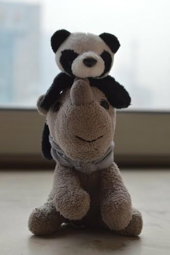 Ringo with his panda girlfriend