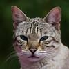 Pixi (WaterBugsPics) Tags: cy2 cat squareformat