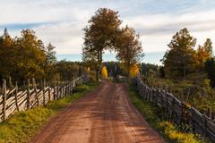 _MG_7055_LR_M (cls-70) Tags: autumn höst gravelroad grusväg gärdesgård roundpolefence