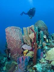 Dominica - Diver