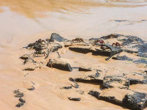 Fernando de Noronha Insel crab
